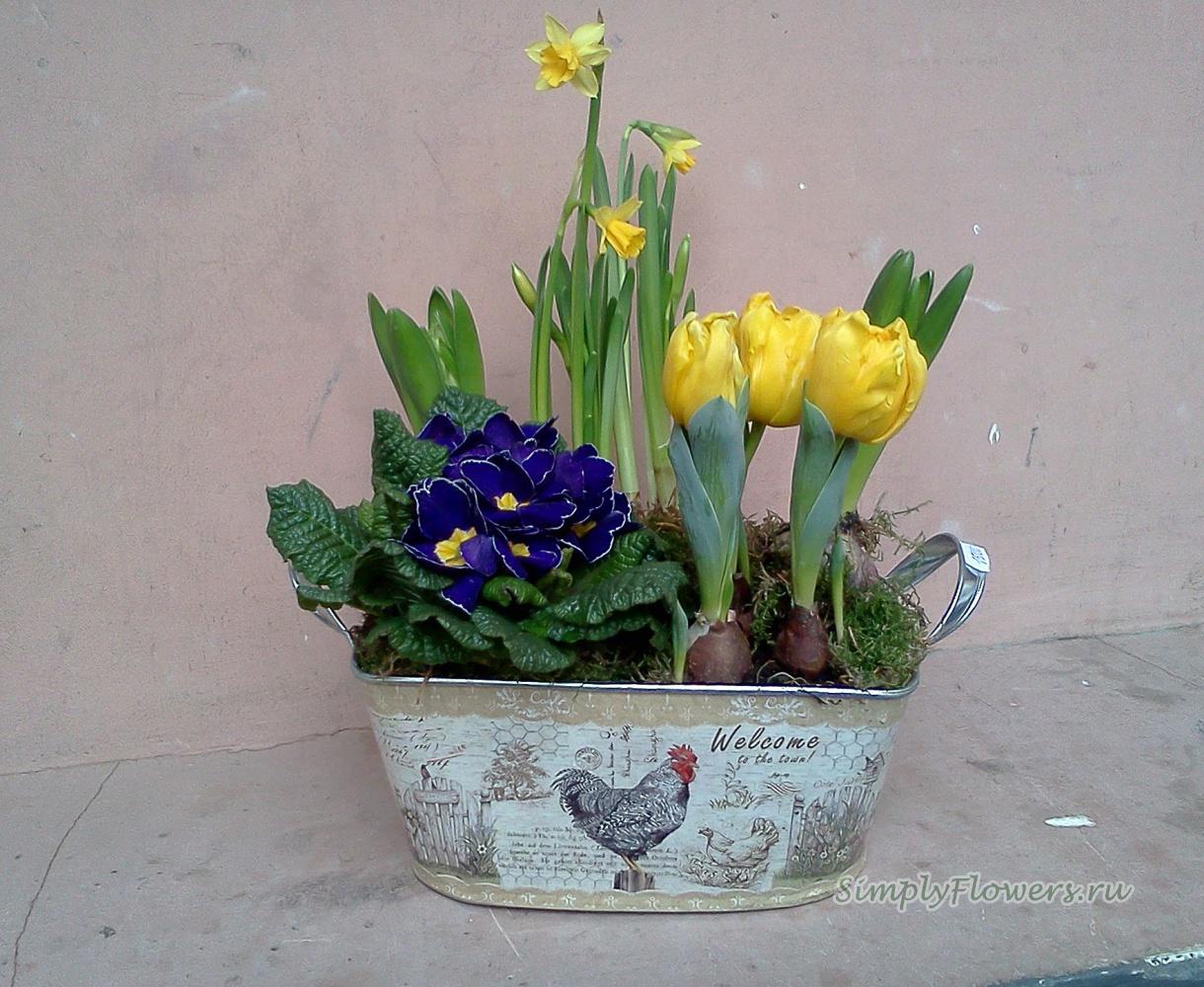 Красивая композиция из цветов в горшках фото